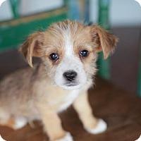 Adopt A Pet :: Fargo - San Antonio, TX