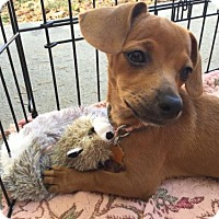 Adopt A Pet :: Ophelia - Sunnyvale, CA