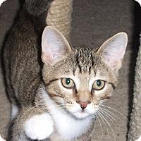 Adopt A Pet :: Billee - Colmar, PA