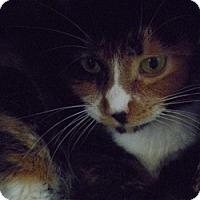 Adopt A Pet :: Tinker - Hamburg, NY