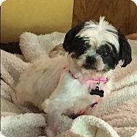 Adopt A Pet :: Mona - Freedom, PA