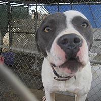 Adopt A Pet :: Nikki - Lancaster, CA