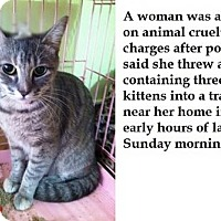 Adopt A Pet :: Ballanna - Hudson, NY