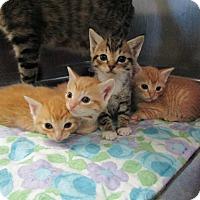 Adopt A Pet :: John - Smithtown, NY