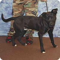 Adopt A Pet :: SEUSS - Louisville, KY
