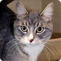 Adopt A Pet :: Miss Kitty - Duluth, MN