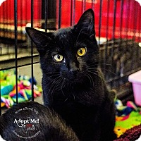 Adopt A Pet :: A..  Penny - Mooresville, NC