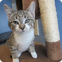 Adopt A Pet :: Chewy - Northfield, MN