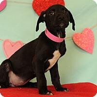 Adopt A Pet :: Daphne - Waldorf, MD