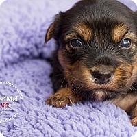 Adopt A Pet :: RYLAN - Inland Empire, CA