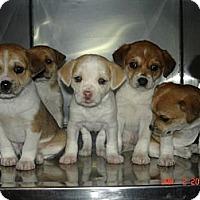 Adopt A Pet :: Leigh - Stilwell, OK
