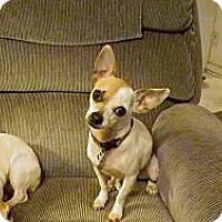 Adopt A Pet :: Cariad - Duluth, GA