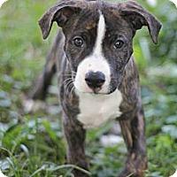 Adopt A Pet :: Milo - Reisterstown, MD