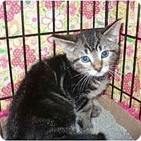 Adopt A Pet :: Moonlight - Colmar, PA