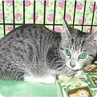 Adopt A Pet :: Flash - Colmar, PA
