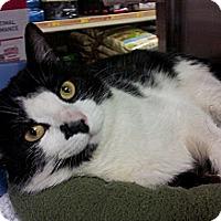 Adopt A Pet :: Hanna - Springfield, PA
