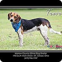 Adopt A Pet :: Trevor - Delaware, OH