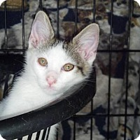 Adopt A Pet :: JIMMY-Coming Soon! - Scottsdale, AZ