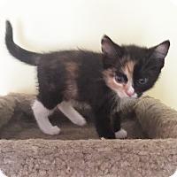 Adopt A Pet :: Daisy - N. Billerica, MA