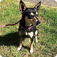 Adopt A Pet :: Creme - McKenna, WA