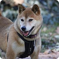 Adopt A Pet :: Kiko - Manassas, VA