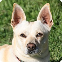 Adopt A Pet :: Mandy - Edmonton, AB