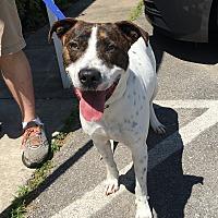 Adopt A Pet :: Jester - Clarksville, TN