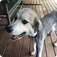 Adopt A Pet :: Cowboy - Bristol, CT