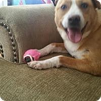 Adopt A Pet :: Jesse - Manhasset, NY