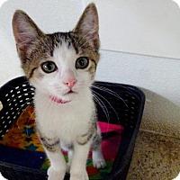 Adopt A Pet :: Winnie - Belleville, MI