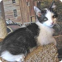 Adopt A Pet :: Abner - Davis, CA