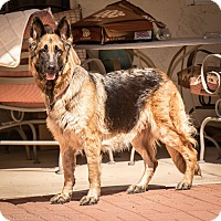 Adopt A Pet :: Ziva - Phoenix, AZ