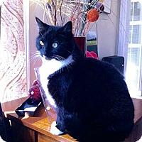 Adopt A Pet :: Bootsy - Novato, CA
