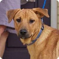 Adopt A Pet :: Wrangler - Knoxville, TN