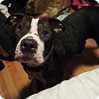 Adopt A Pet :: Kansas - Bruce Township, MI