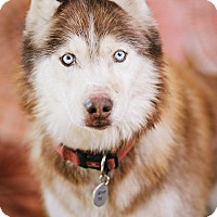Adopt A Pet :: Alrik - Portland, OR