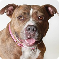 Adopt A Pet :: Princess - Eugene, OR