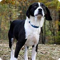 Adopt A Pet :: ARGO - Portland, ME