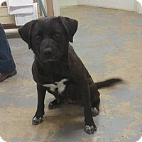Adopt A Pet :: Beth - Trenton, MO