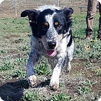 Adopt A Pet :: GRACE - Santa Rosa, CA