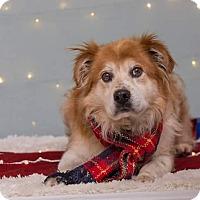 Adopt A Pet :: Leonard - Flint, MI
