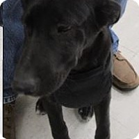 Labrador Retriever Mix Dog for adoption in Von Ormy, Texas - Toby