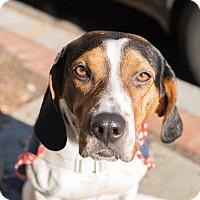 Adopt A Pet :: Konan - Washington, DC