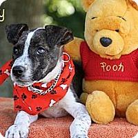Adopt A Pet :: Leroy - Albany, NY