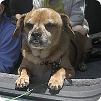 Adopt A Pet :: Valentino - Poway, CA