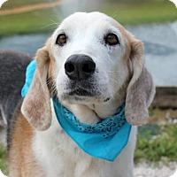 Adopt A Pet :: Jack 992 - Loxahatchee, FL