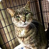 Adopt A Pet :: ASH! - Philadelphia, PA