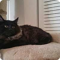 Adopt A Pet :: Liberace - Turnersville, NJ