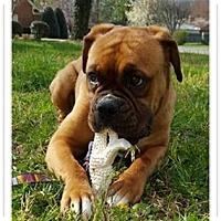 Adopt A Pet :: Emmy - Brentwood, TN
