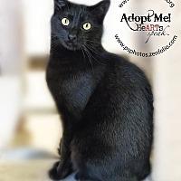 Adopt A Pet :: Ajay - Belton, MO